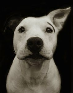 Providence, Rhode Island-based photographer Traer Scott shoots up-close black and white portraits of shelter dogs, some of which found good homes while others were eventually euthanized.