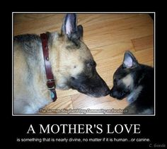 German Shepherd Dog - A mothers love quote