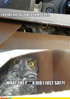 this is a legitimate expression of the attitudes of most owls I have come into contact with