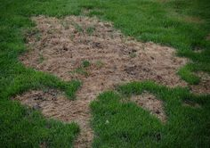 How To Repair Grass Damaged By Dog Urine