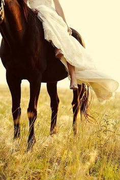 Horse and bride- beautiful shot