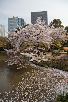 Koishikawa Korakuen Garden, Tokyo 小石川後楽園