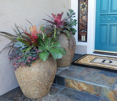 It took me a while to knock on her door admiring these two beautiful pots filled with huge bromeliads, succulents and she even added a Loropetalum chinense to the grouping.