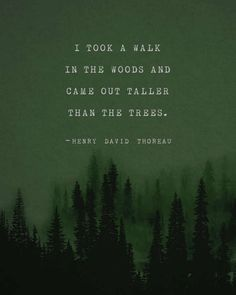"""I took a walk in the woods and came out taller than the trees."""" –Henry David Thoreau."""