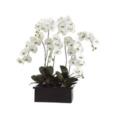 """42"""" Phalaenopsis Orchid~ White/Green"""