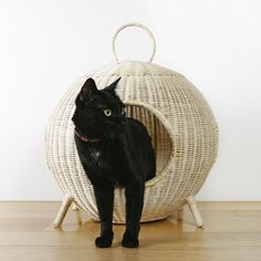 That S What I Call A Cozy Cat Condo Visit Coolkittycondos And Find More Cool