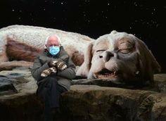 Bernie Memes, Chuck Palahniuk, Bernie Sanders, Fun Facts, Comedy, Lion Sculpture, Statue, Funny, Cute