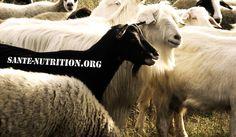 Boycottons Santé-Nutrition.org, le site-poubelle qui vit du piratage | DurAAvaler. Entre temps, d'autres articles ont vu le jour, dénonçant la désinformation manifeste du webmaster de Santé Nutrition
