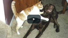 See what happens when #dogs meet #cats; it's a funny pet video you will love watching   #funny