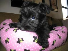 Lucy 2 mo                                                                                                                                                                                 More