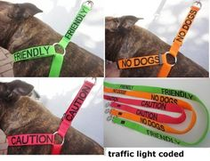 Dog Collars/leads that say their dogs personality to warn/tell other people. (Friendly, No Dogs, Caution, Deaf, Nervous).  Might need to invest in one for Jessie!