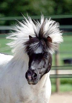 hahaha what an awesome hairstyle for horses