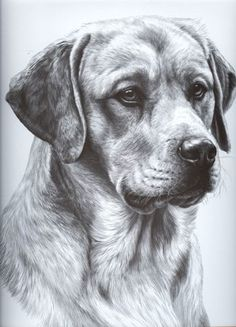 Super The Scratchbook Michele Nicolette Dog Milk Dog Milk Other Largest Home Design Picture Inspirations Pitcheantrous
