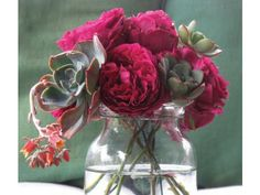Old garden roses and blue-green succulents in a glass jar! prinzing-slow-debra-flora