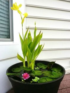 Water is the source of life, it's so refreshing and so natural in every space! Backyard ponds, fountains and other water bodies that can enliven your patio