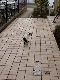 野良猫@世田谷