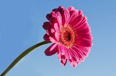 Flor sobre fondo de cielo azul