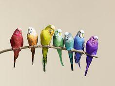 A rainbow of birds. #Birds #Rainbow #Color www.facebook.com/onelostfeather www.facebook.com/rainbowstarfishpublishing