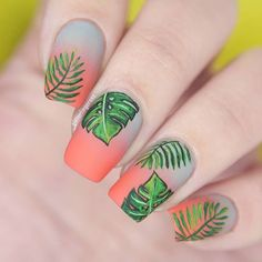 Gray-coral gradient with freehand palms