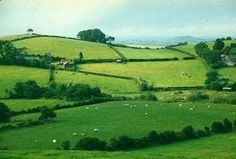 fields_of_co_down.jpg (450×304)