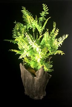 Artificial fern in a concrete free formed planter.  kamakdesigns.com