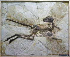 A new dinosaur discovery gives us new insight into an incredible moment in evolution