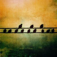 Blackbirds all in a row