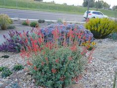 A west Metro botanic garden: Kendrick Lake Salvia darcyi and other colorful treasures