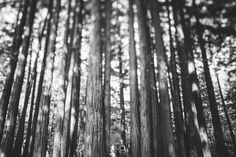 bride jordan and groom david get married during their beautiful ceremony surrounded by tall redwood trees at their pema osel ling retreat center wedding in the santa cruz redwood mountains in corralitos, ca in this black and white image
