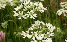 Magical white gardens are easy to achieve at home. TV Gardener David Domoney chooses his top white plants for chic, elegant flowers. Small White Flowers, Elegant Flowers, Green Flowers, White Flowering Shrubs, Raised Flower Beds, Raised Beds, White Plants, Moon Garden, Plants