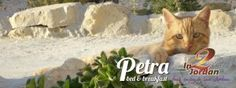 New programs in cooperation with Petra Bed and Breakfast