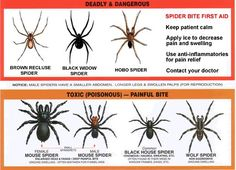 Spider Identification – Beginner's Guide to Spider Identification - http: //spiderbites.net/spider-identification/