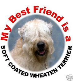 2 Soft Coated Wheaten Terrier Car Stickers by Starprint | eBay