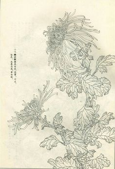 Botanical Drawings, Botanical Illustration, Illustration Art, Japanese Art Styles, Japanese Prints, Oriental Flowers, Silk Art, China Art, Art For Art Sake