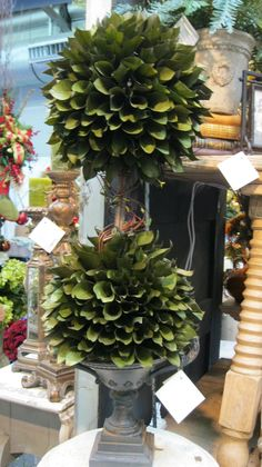 Magnolia leaf topiary seen at the New York gift show! - The Enchanted Home Container Plants, Container Gardening, Flower Containers, Topiary Trees, Topiary Decor, Topiary Plants, Potted Plants, Tuscan Decorating, Decorating Ideas
