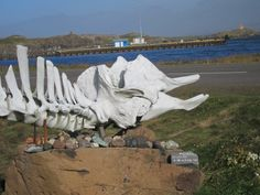 Whale skeleton on display at north Icelandic fishing village on the Atlantic Ocean