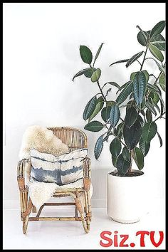 The Best Oversized Houseplants to Fill Your Home With big house plants,  #big #bigHousePlants… | 1000 - Modern#big #bighouseplants #fill #home #house #houseplants #modern #oversized #plants Big House Plants, Big Indoor Plants, House Plants Decor, Hanging Plants, Plant Decor, Build A Greenhouse, Diy Chicken Coop, Interior Plants, Big Houses
