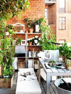 Whether your outdoor space is big or small, you can create your perfect garden with IKEA pots, plants and other gardening accessories. Find more ideas in our Spring Refresh Guide. Garden Spaces, Balcony Garden, Garden Planters, Potted Fruit Trees, Growing Fruit Trees, Garden Furniture, Outdoor Furniture Sets, Outdoor Decor, Inside Outside