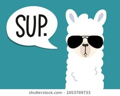 Llama poster with inscription sup means. Simple alpaca head with sunglasses on blue background. Vector illustration with llama for poster case textile invitation etc. Buy this stock vector and explore similar vectors at Adobe Stock Llama Images, Llama Pictures, Cute Pictures, Cute Alpaca, Llama Alpaca, Alpacas, Llamas Animal, Alpaca Drawing, Llama Face