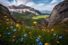 Flowers of the Dolomites by Dominik Kisskalt on 500px