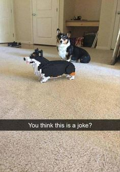 Afternoon Funny Animal Picture Dump 25 Pics