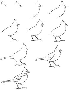 Google Image Result for http://www.cartooncritters.com/drawtoons/drawcardinal.gif