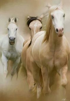 A gray, a buckskin (or maybe a dun) and a blue-eyed pale palomino