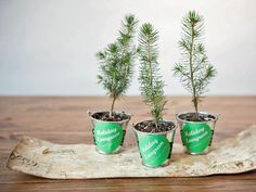 DIY Holiday Party Favors. I LOVE the idea of mini evergreen trees as holiday party favors.