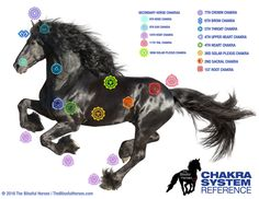 Image result for horse chakra points