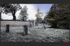 https://flic.kr/p/Bzw5iX | Autumn at the Jewish cemetery in Ferrara | © All rights reserved. Use without permission is illegal.