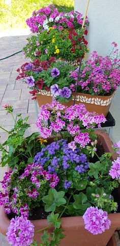 Plant Pots, Potted Plants, Geranium Plant, Flower Containers, Beautiful Photos Of Nature, Geraniums, Window, Outdoors, Gardening