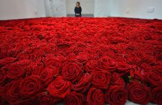 Anya Gallaccio, as her new installation of 10,000 red roses – called Red on Green – is laid upon the gallery floor at Jupiter Artland in Edinburgh