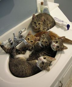 cats in sink     :D