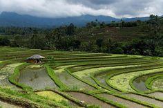 Reposting @viaggiandosenzaconfini: 📍Bali, Indonesia 🇮🇩 Le Jatiluwih Rice Terraces è uno dei luoghi più belli che si possono vedere a Bali. Meno battute dai turisti rispetto a quelle di Tegalalang, sono molto più grandi ed estese, offrendo un panorama unico. Non a caso sono patrimonio dell'umanità dell'Unesco. • • • • • • • #travel #traveling #traveller #travelling #travelblog #travelblogger #travelgram #travelphotography #instatravel #instagood #instadaily #instablogger #trip #photo